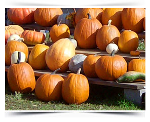 pumpkins Glastonbury CT